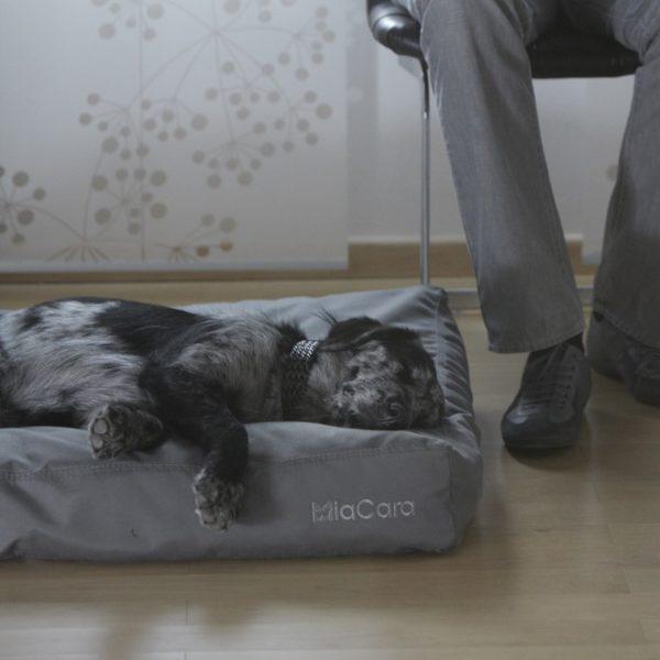 Coussin pour chien - LUVIO - Ardoise