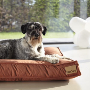 Coussin pour chien design – LINO