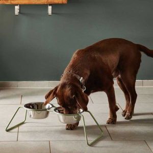 Gamelle double pour chien design contemporain – CENA