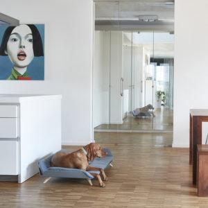 Canapé Lit luxe pour chien – LETTO