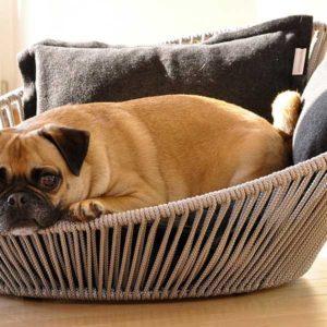 Panier design pour chien – SIRO TWIST