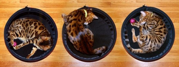 Hamac pour chat et chien - pour SLEEPYPOD