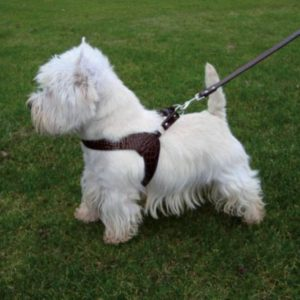 Harnais pour chien – CROCO