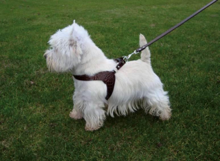 Harnais pour chien - CROCO marron