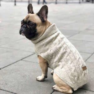 Pull pour chien en laine – ASPEN