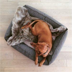Couverture en fourrure pour chien – LANA