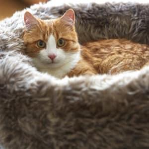 Panier pour chat en fourrure – LANA