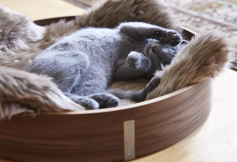 Corbeille lit design pour chat - ANELLO Hêtre