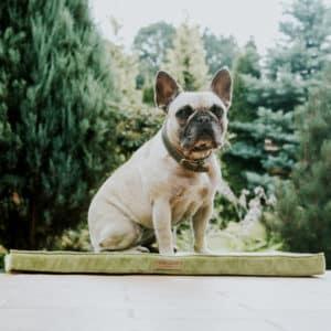 Matelas lit pour chien – DOG MAT