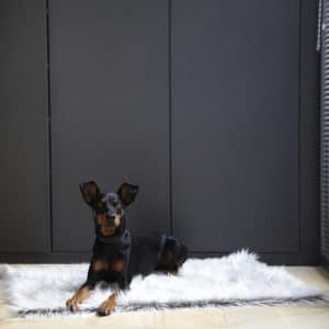 Couverture pour chien fourrure poils longs – CAPELLO