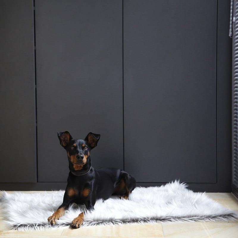 Plaid pour chien fourrure poils longs - CAPELLO Blanc