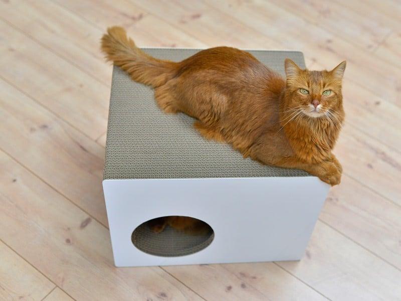 Griffoir maison en carton pour chat - PREDIA EKHAUS
