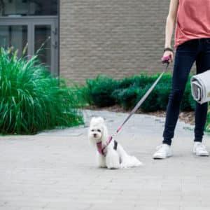 Harnais et laisse design pour chien – Candy