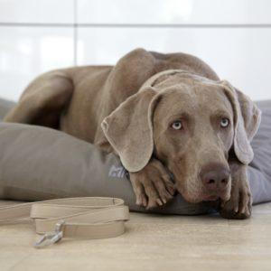 Housse de coussin pour chien – LUVIO – Taupe