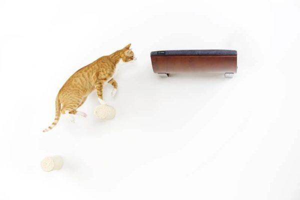 Marches d'escalade pour étagère murale chat