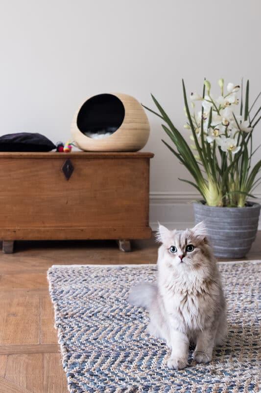 Niche design pour chat dandy cat
