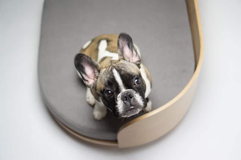 Canapé design pour chien - LOUE DOG BED