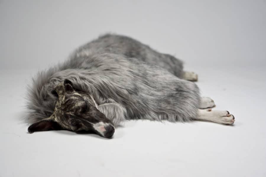 Plaid pour chien fourrure synthétique - FORA