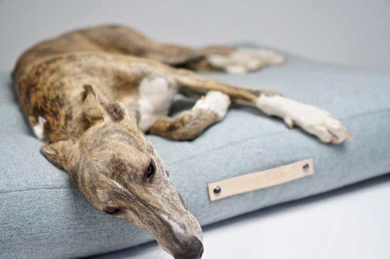 Coussin pour chien design scandinave - LABBVENN