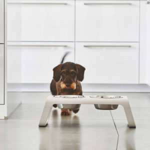 Gamelle haut de gamme chien – DESCO NATURAL