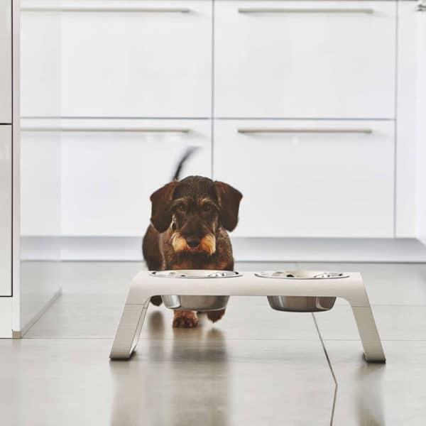 Gamelle haut de gamme chien - DESCO NATURAL