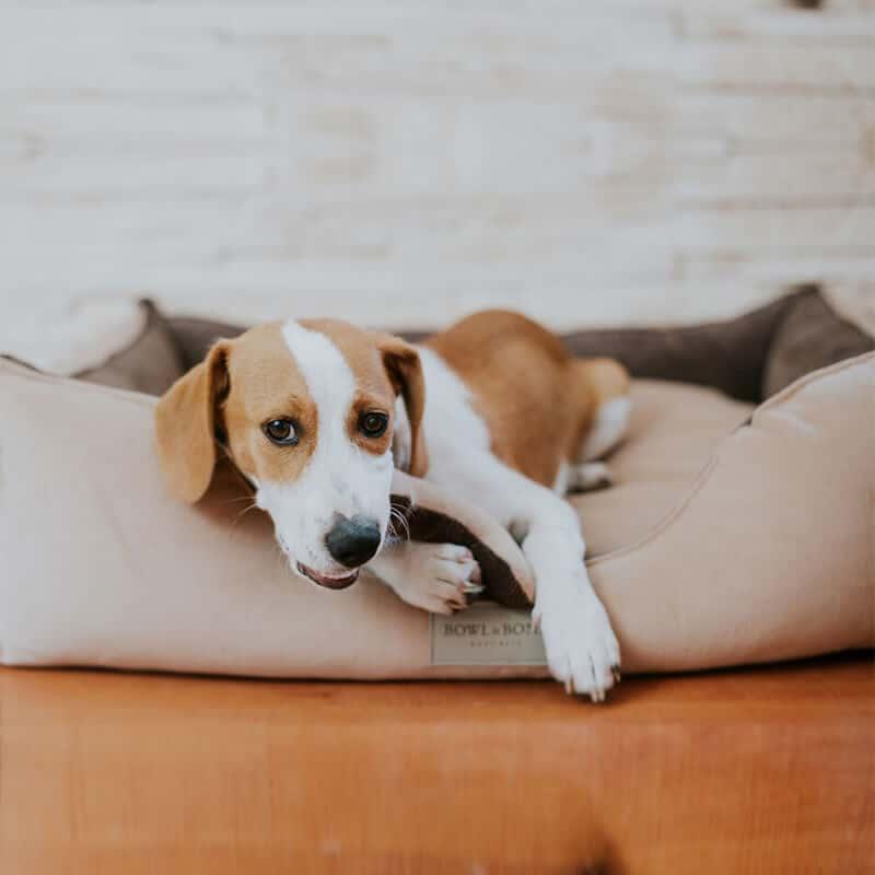 Panier pour chien design élégant - CLASSIC