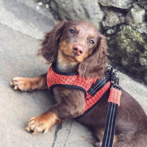 Harnais confortable avec laisse pour chien – SOHO