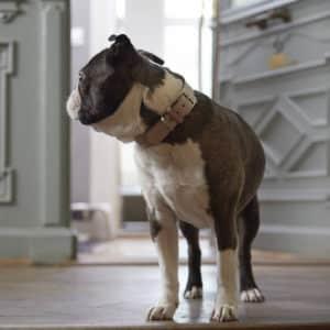 Collier en cuir de luxe pour chien – TORINO