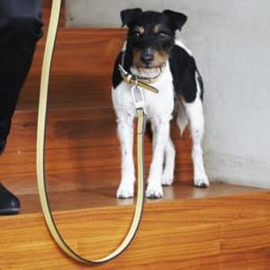 Laisse en cuir de luxe pour chien – TORINO