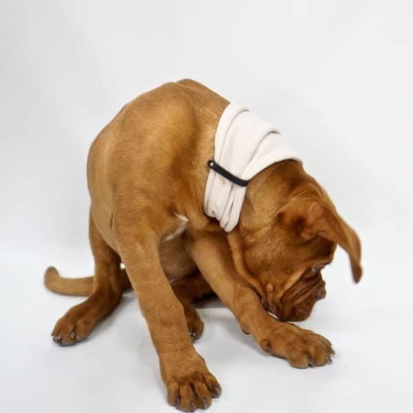 Foulard ou Cache col pour chien - INKO