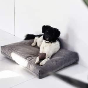 Coussin pour chien design de luxe  – DUO