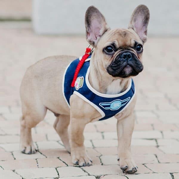 Harnais et laisse pour chien POP AND FUN- DENIM