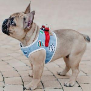 Harnais et laisse pour chien POP – DENIM