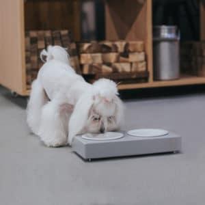 Gamelle double design en céramique pour chien – DUO CERAMIC