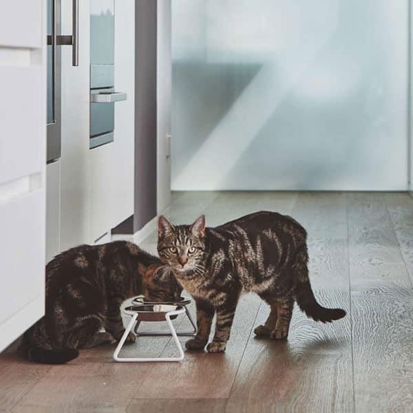 Gamelles pour chat design épuré - CENA