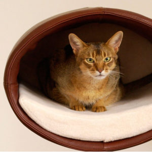Couchage Lit mural pour chat – RONDO WALL CUIR