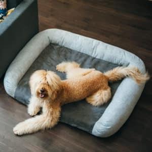 Panier pour chien à mémoire de forme – PETPLAY