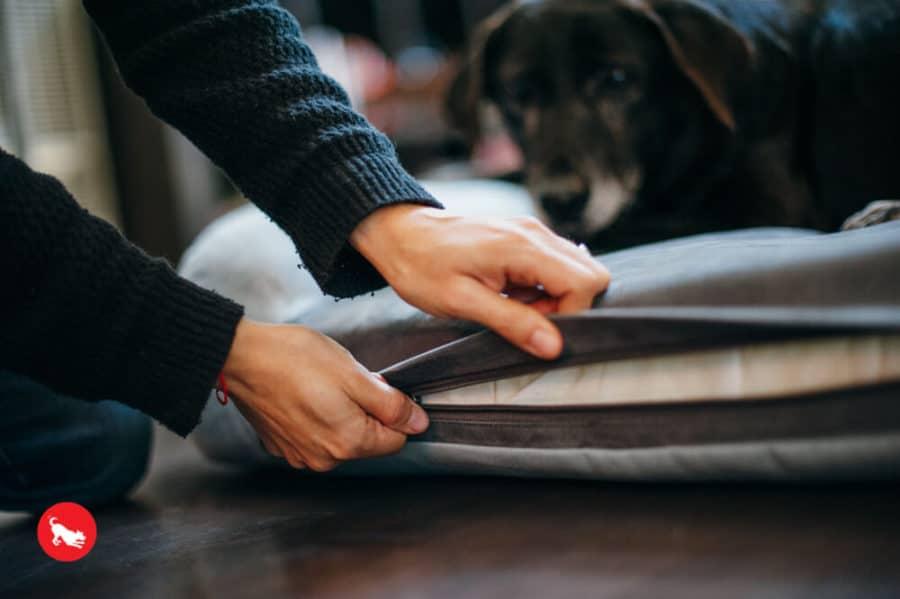 Panier pour chien design à mémoire de forme - CALIFORNIA