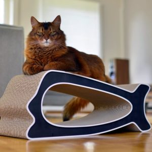 Griffoir en carton design pour chat – LA BALEINE