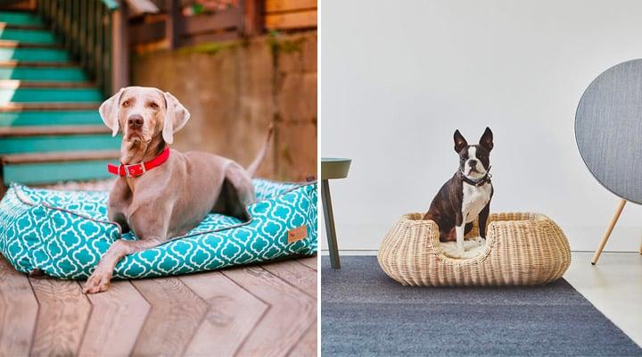 Bien choisir son panier design pour chien