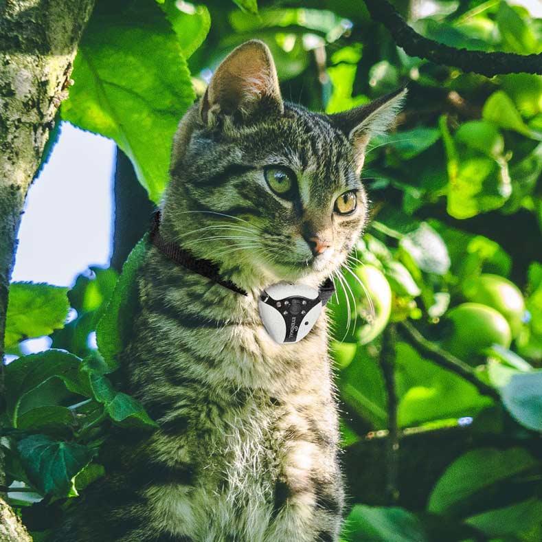 camera embarquée chien chat