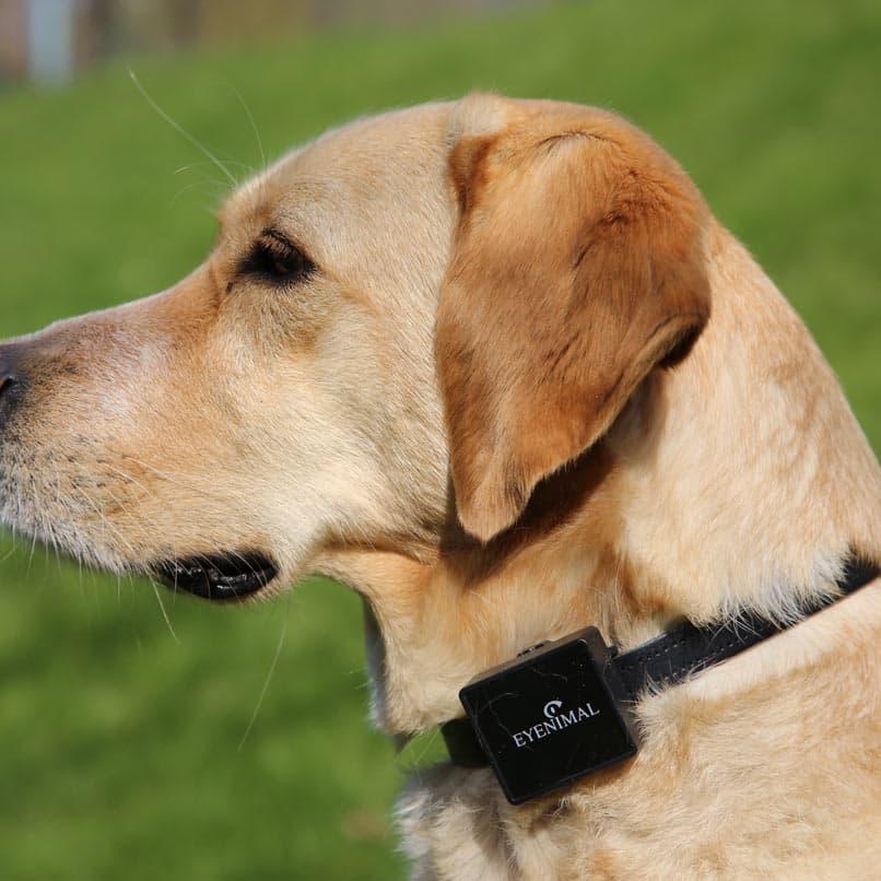 Collier gps connecté pour chiens et chats