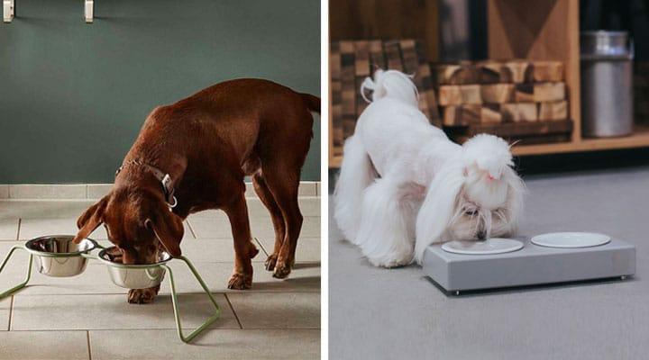 Les différentes gamelles pour chien