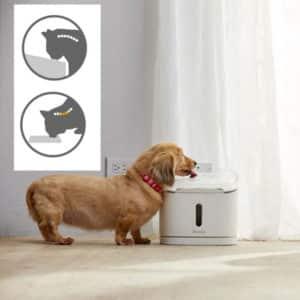 Fontaine à eau design pour chiens et chats – SPRING