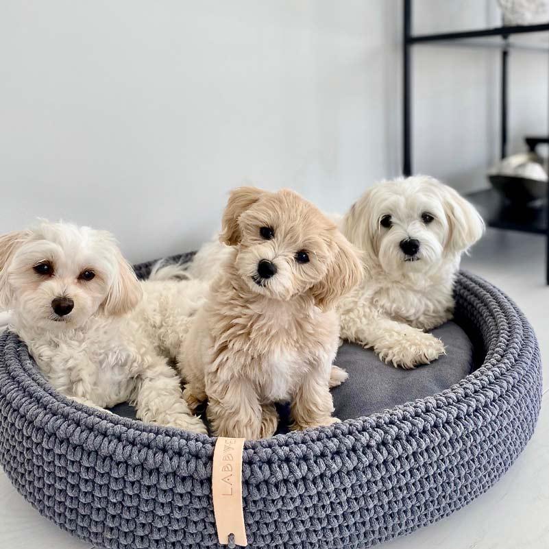 panier design pour chien