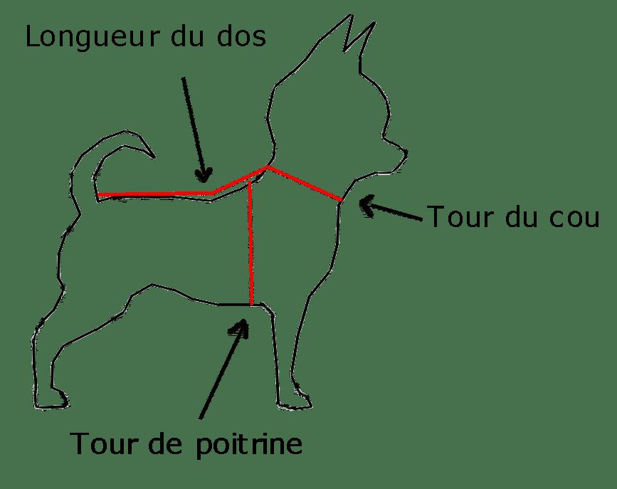 mesure des chiens