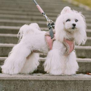 Harnais fourrure design avec laisse pour chien – YETI