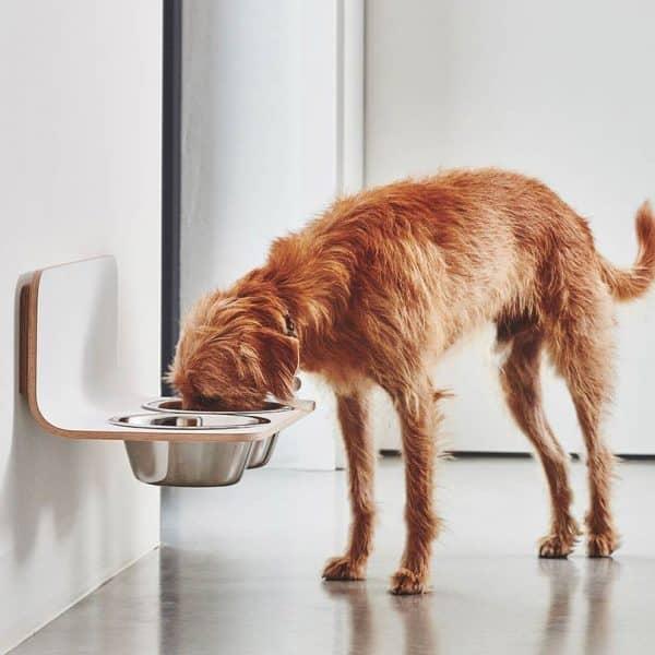 gamelle murale haut de gamme chien