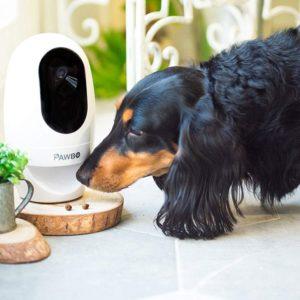 Caméra interactive pour chien et chat – PAWBO+