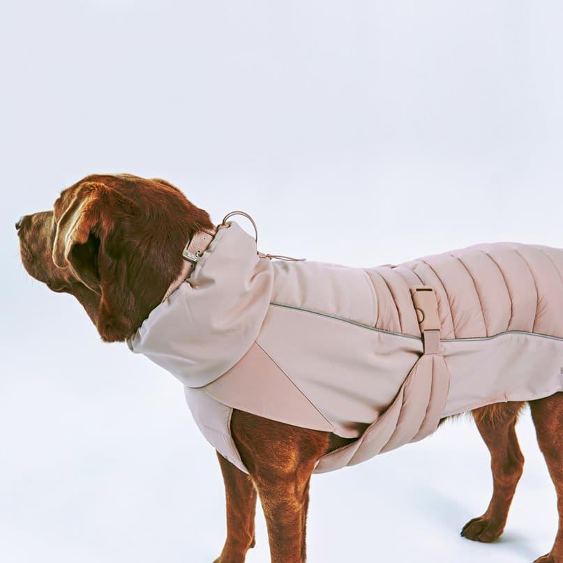manteau hiver pour chien impermeable stefano